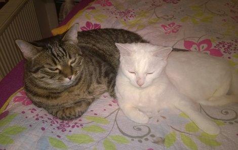 Monty s Nellynkou jsou nerozlučná dvojka.