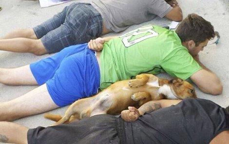 Odhalené břicho, zvednuté packy – fotka vzdávajícího se psa obletěla svět.