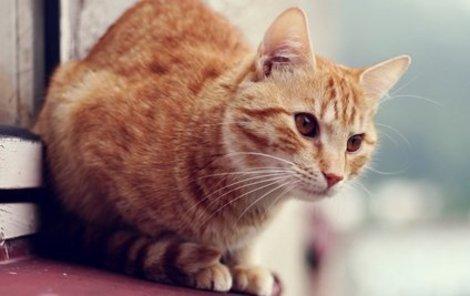 Kočka vyvázla bez zranění.