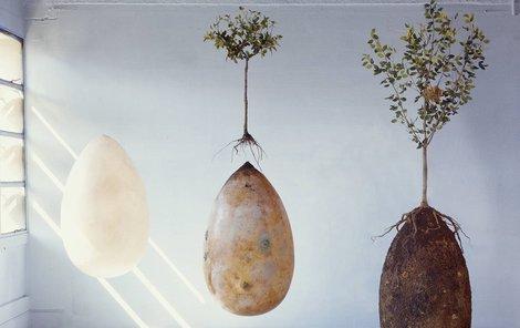 Škrobová vejce s tělem nakonec zetlejí společně.