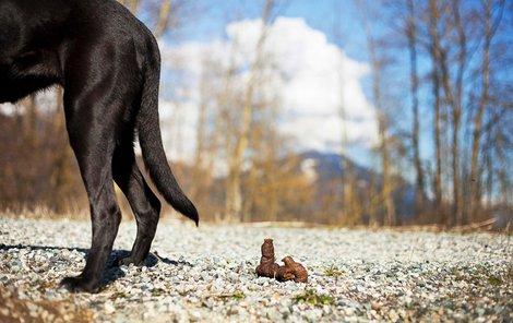 Psí exkrement může vašeho psa usvědčit.