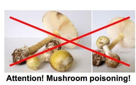 Plakát, který běžence upozorňuje, že některé houby jsou smrtelně jedovaté.
