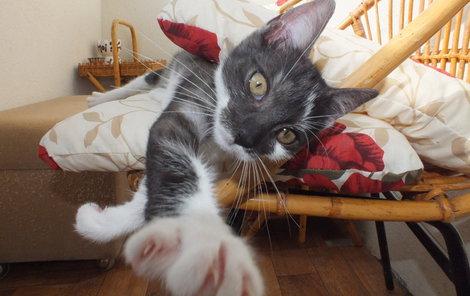 Pohodářka Eliška už v soutěži je, proč v ní tedy ještě není vaše kočka?