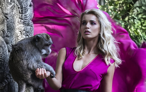 Vzteklým opičkám není radno dívat se do očí!