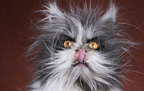 Kocour je zvířecí celebritou, má i vlastní webové stránky.