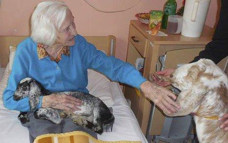 Malé i větší kozí terapeutky jsou populární hlavně u seniorů upoutaných na lůžko.