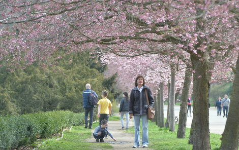 Stromy sice jarně kvetou, ale bundy ještě neodkládejte.