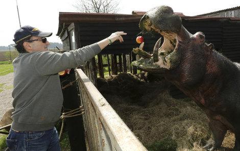 Ivan Ringel umyl hrochovi před fotografováním obličej azuby.
