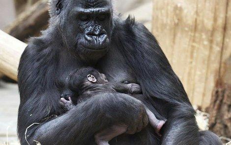 Shinda se svým mládětem.