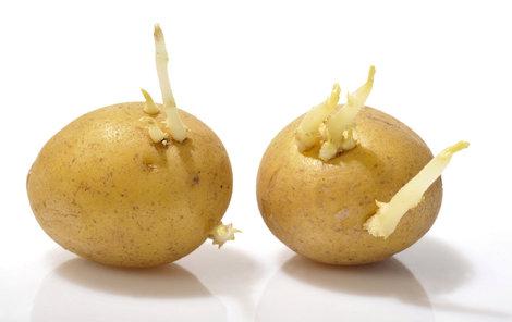 Co se starými bramborami?