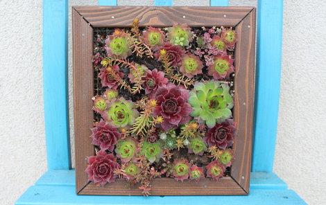 Jakmile se rostlinky pořádně zakoření, můžete obraz pověsit třeba na zeď.