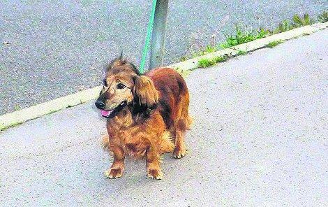 Pes cestovatel si rád štěkne, zda ale slovensky, či maďarsky, poznat nejde.