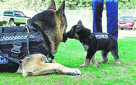 Nové vesty mají pejsky ochránit před útoky.