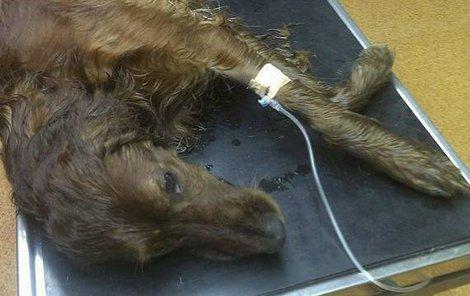 Krutou smrt připravil psovi řidič!