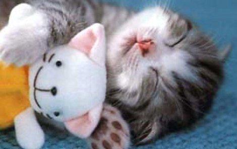 Kočky mazlení zbožňují!