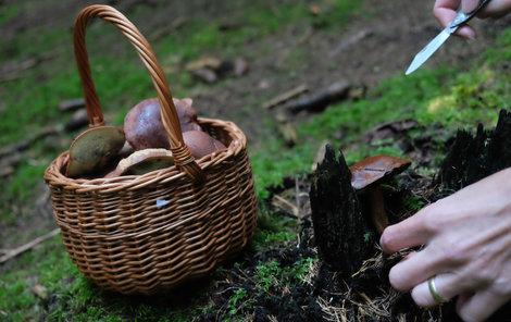Hříbky z lesa v Uničově na Olomoucku.