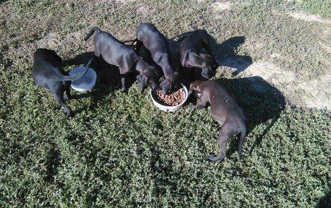 Pětice nalezených psíků. Kdosi je pohodil v krabici do pole.