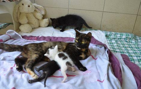 Edita momentálně dopřává mateřské mléko černému Plaváčkovi a flekaté Bimbě. Také černému Eugenovi (vzadu).