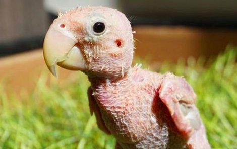 Nahý papoušek baví internet!