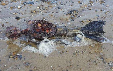 Mrtvý tuleň, nebo... Mořská panna?!