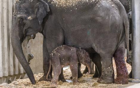 Mamince Tamaře tekly při porodu potoky slz.