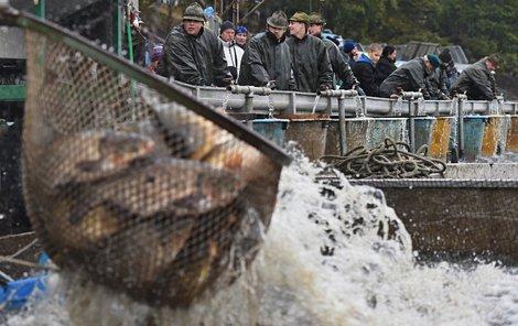 Rybáři zahájili třídenní výlov největšího českého rybníku Rožmberk u Třeboně.