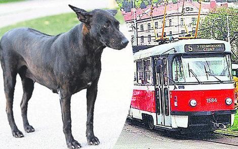 Hafana zmátla výluka tramvají...