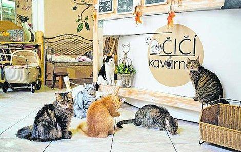 Do kavárny chodí i stálí zákazníci, kteří už kočky znají a mají své oblíbence.