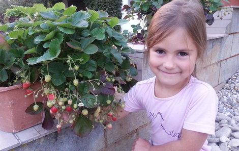 Anetka Marková mlsá sousedčiny jahody.
