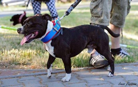 Pes Fin se sám vrátil domů, policie si pro něj přijela a předala ho odchytové službě.
