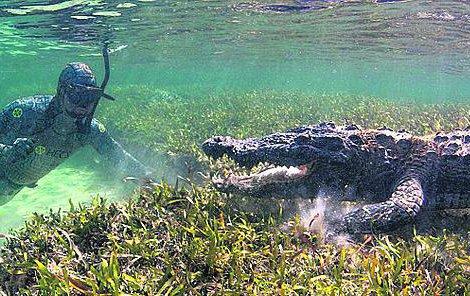Možná je i krokodýl zvědavý a zaskočený drzostí lidí, proto neútočil.