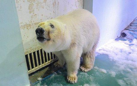 Medvěd vypadá na první pohled jako týrané zvíře, Číňané se s ním přesto dál fotí...