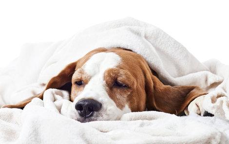 5 důvodů, proč pouštíme chlupáče do postele!