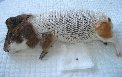 Miki operaci statečně přestál.