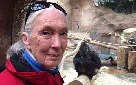 Na svých cestách Jane navštívila i pražskou zoo.