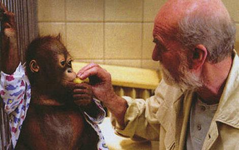 Orangutan Ňuňák si zahrál Ámose ve filmu Dva lidi v zoo. Na snímku s hercem Miroslavem Macháčkem.