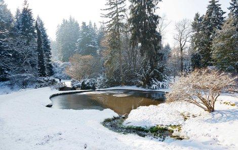 Zahrada může být i v zimě magicky krásná.