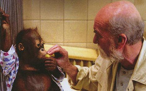 Orangutani ve filmu.