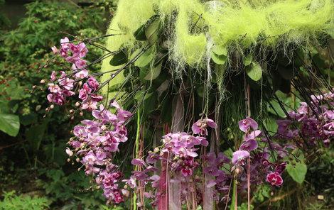 V exotické Fata Morganě rozkvetou orchideje.