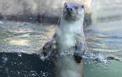 Zaujmout elegrantní »vodní« postoj.