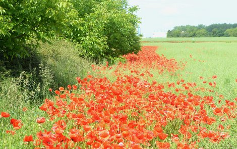 »Červený koberec« na Pardubicku.