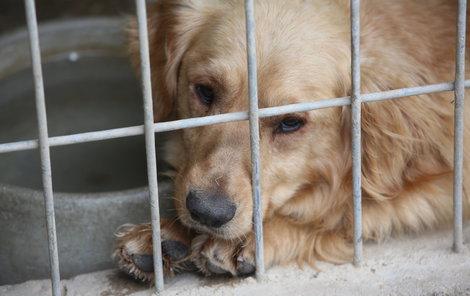 Psi v útulku Bouchalka čipy mají.