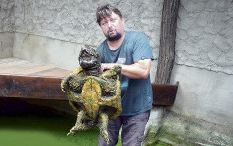 """Největší na světě Nejdravější želvou je kajmanka supí, rozšířená na jihovýchodu USA. """"Indiáni se jí obávali víc než pumy,"""" řekl Hojný o největší sladkovodní želvě na světě, která může vážit i metrák. Její stisk může ublížit i člověku."""