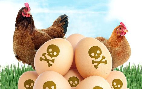 V Německu objevili vejce s nebezpečným s pesticidem fipronil.