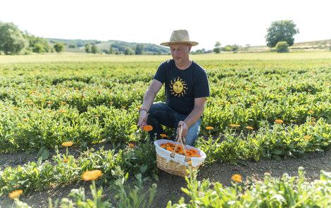 Zakladatel firmy Tomáš Mitáček na poli s měsíčkem lékařským ukazuje, jak se byliny sbírají.