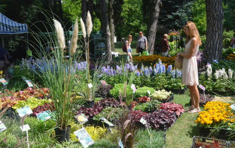 Olomoucké parky se proměnily v květinovou rajskou zahradu.