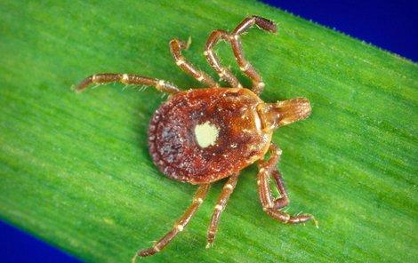 Klíšťata jsou postrachem hlavně proto, že přenášejí mnoho nebezpečných nemocí.