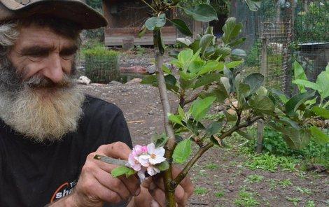 Ladislavu Váňovi teď vykvetla jabloňka.