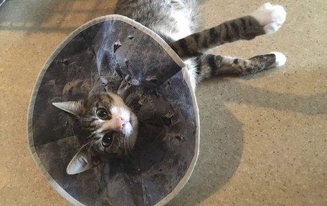 Perníček se již po operaci zotavuje.