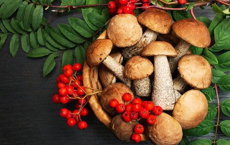 Češi jsou národ houbařů!
